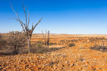 Eagles nest in outback Australia.