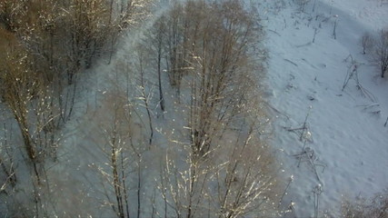 View from above of forest in wintertime