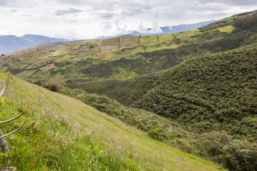 Borde entre cultivos y bosque nativo en la sierra de Ecuador