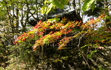 Trees were autumn leaves in Nikko