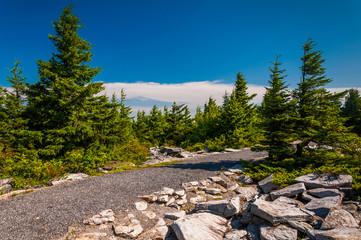 Path through spruce trees on the summit of Spruce Knob, Monongah