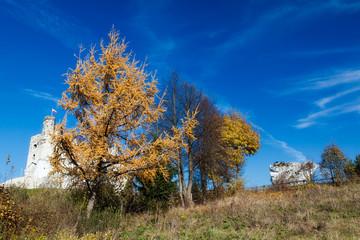 Jura Landscape in Poland