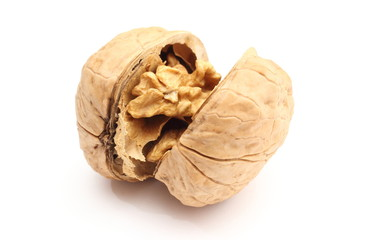 Opened brown and fresh walnut on white background