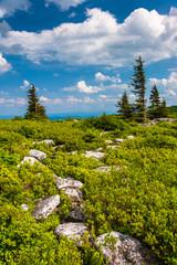 Rocks and pine trees at Bear Rocks Preserve, Monongahela Nationa