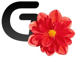 GO con i fiori