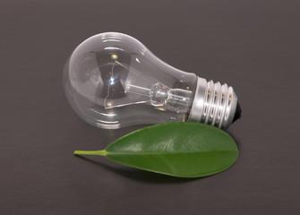 Light bulb and leaf