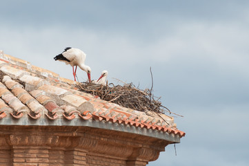 Storks in their nest on a roof
