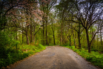 Spring color along a road through a forest in Lancaster County C