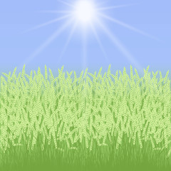 Summer card with grass and spikelets