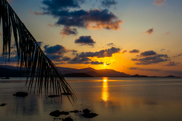 Palm leaves silhouette over sunset on Koh Samui. Thailand