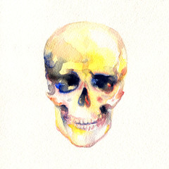 skull .watercolor illustration
