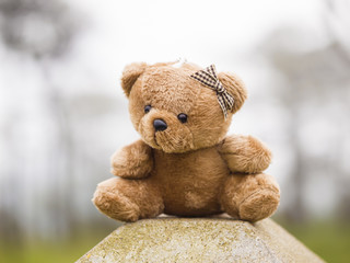 TEDDY BEAR brown color sitting on outdoor