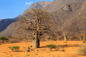 Woman and child walking through a baobab valley