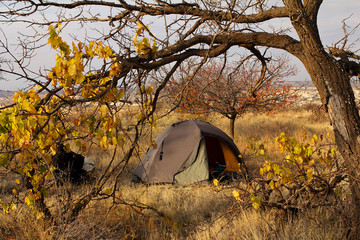 autumn landscape tourist tent under yellowed tree