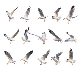 15 different flying seagull actions