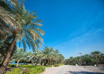 exotic park of palm trees against the blue sky