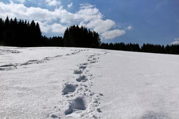 Spuren im tiefen Schnee
