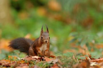 écureuil aux aguets