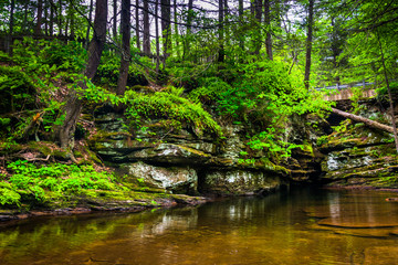 A pool at the top of Adam's Falls, at Ricketts Glen State Park,