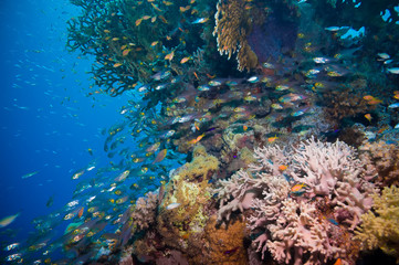 Coral and glass fish in the Red Sea.Egypt
