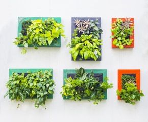 decorated wall in vertical garden