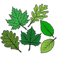 Spring Leaf Collection