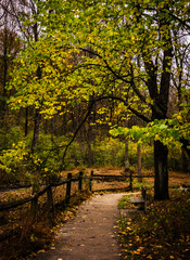 Tree along a path in Nixon Park, near York, Pennsylvania.