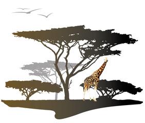 Giraffe with silhouette of tree