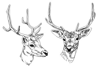 Hand drawn deer heads. Vector illustration.