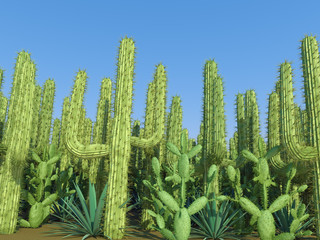 cactus on a sky background