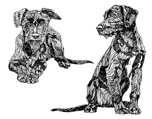 Hand drawn dogs.