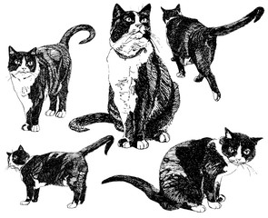 Set of hand drawn cats.