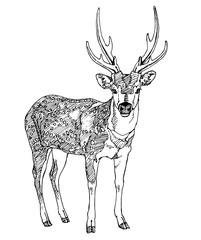 Hand drawn deer. Vector illustration.