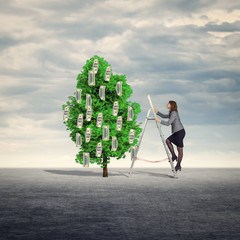 Businesswoman collect money from the money tree.
