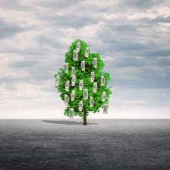Money tree outdoors.
