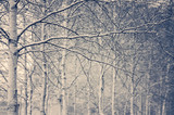 Winter background with snow-covered birch trees in vintage style