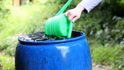 Woman takes rainwater from a blue barrel to watering garden