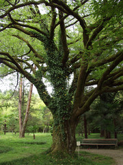Green spreading tree, covered with moss and vines