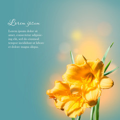 Lily Yellow