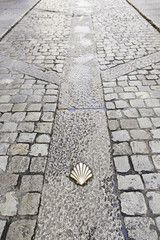 Scallop shell on the floor