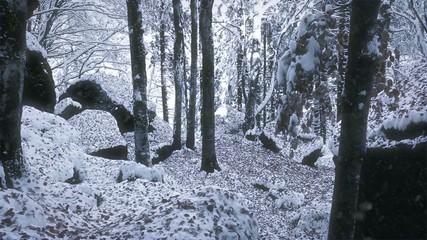 bosco di castagni sotto la neve