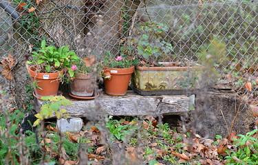 jardin...hiver