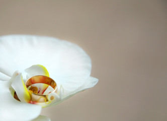 wedding ring on flower