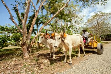 Ochsenkarren in Costa Rica