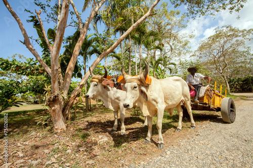 Fotobehang Centraal-Amerika Landen Ochsenkarren in Costa Rica