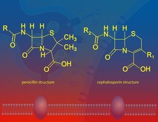 β-lactam antibiotics