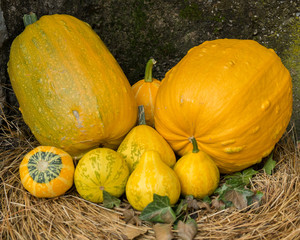 pumpkins on straw