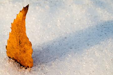 雪上の落葉