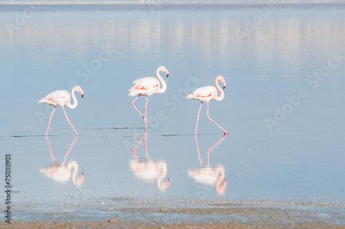 Foto op Aluminium Flamingo Flamingo Birds