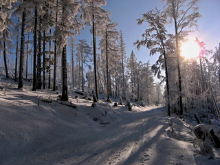 Ski trail in winter forest in clear sunny day